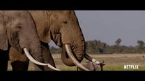 The Ivory Game Fragman