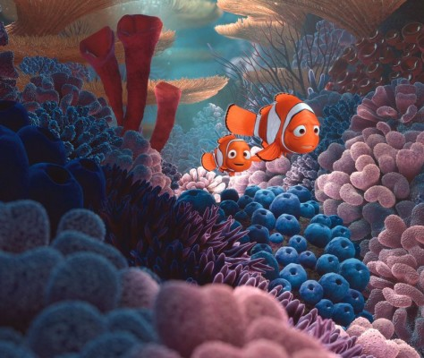 Kayip Balik Nemo 3D : Fotograf